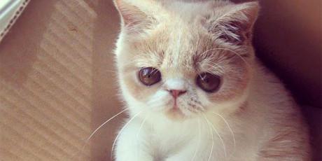 blog-gatitos
