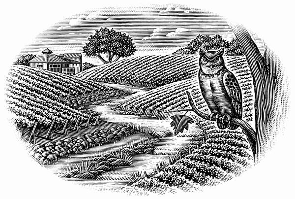 Paisajes de viñedos por Steven Noble