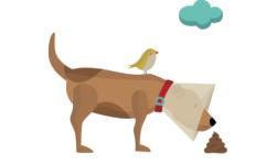 perro oliendo caca con pajarito encima